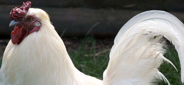 Chicken farmers may be eligible for Arkansas' farm utility exemption.