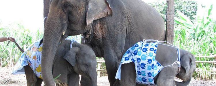 Diapers for humans may soon be exempt in Florida. Diapers for animals would remain taxable.