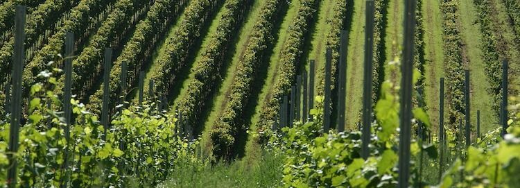 Certain New York wineries no longer need to file annual sales tax information returns.