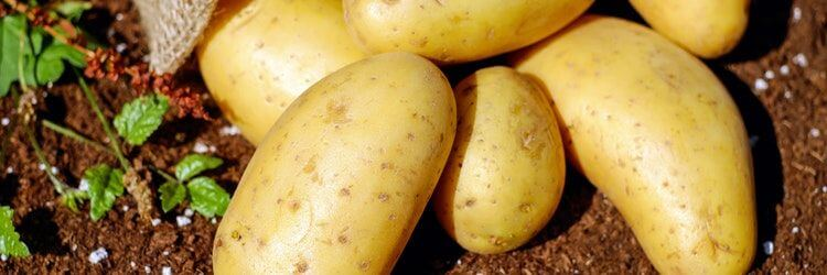 Potato development and other curious excise taxes – Wacky Tax Wednesday